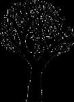 Baum-11