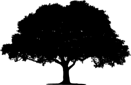 Baum-3