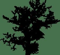 Baum-6