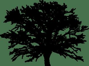 Baum-7